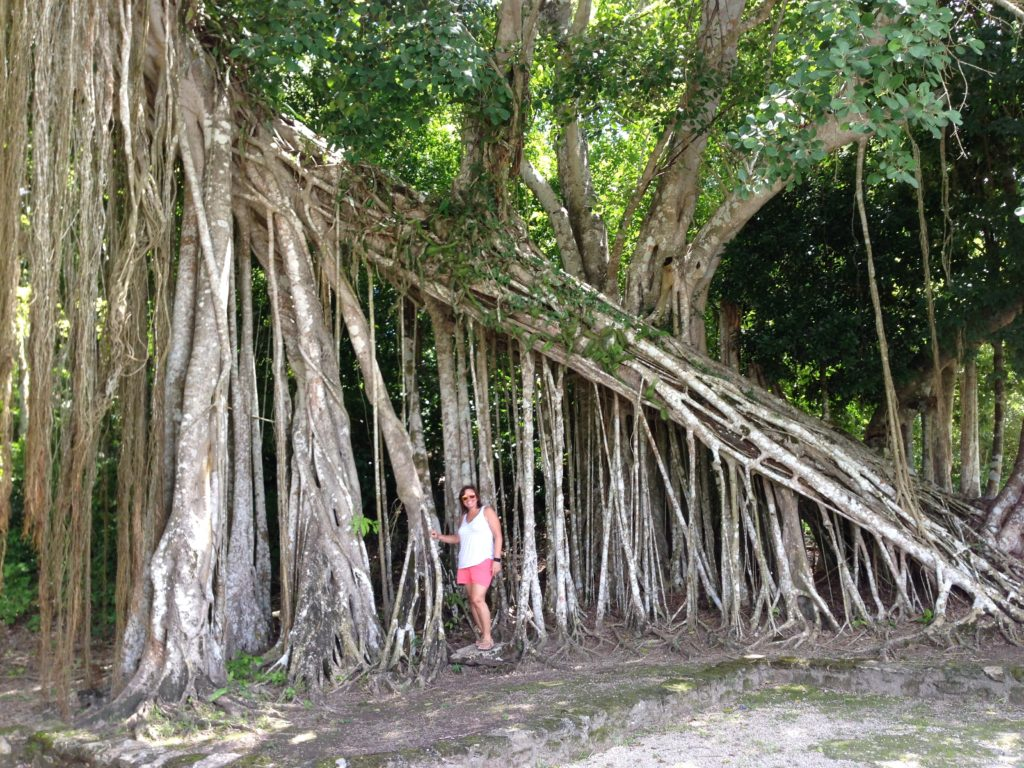 TOP 12 FUN THINGS TO DO IN MAHAHUAL MEXICO featured by top travel blog, The Common Traveler: image of large tree roots