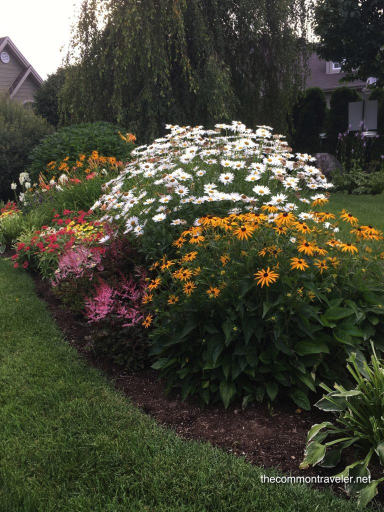 Mont Saint Sauveur plants