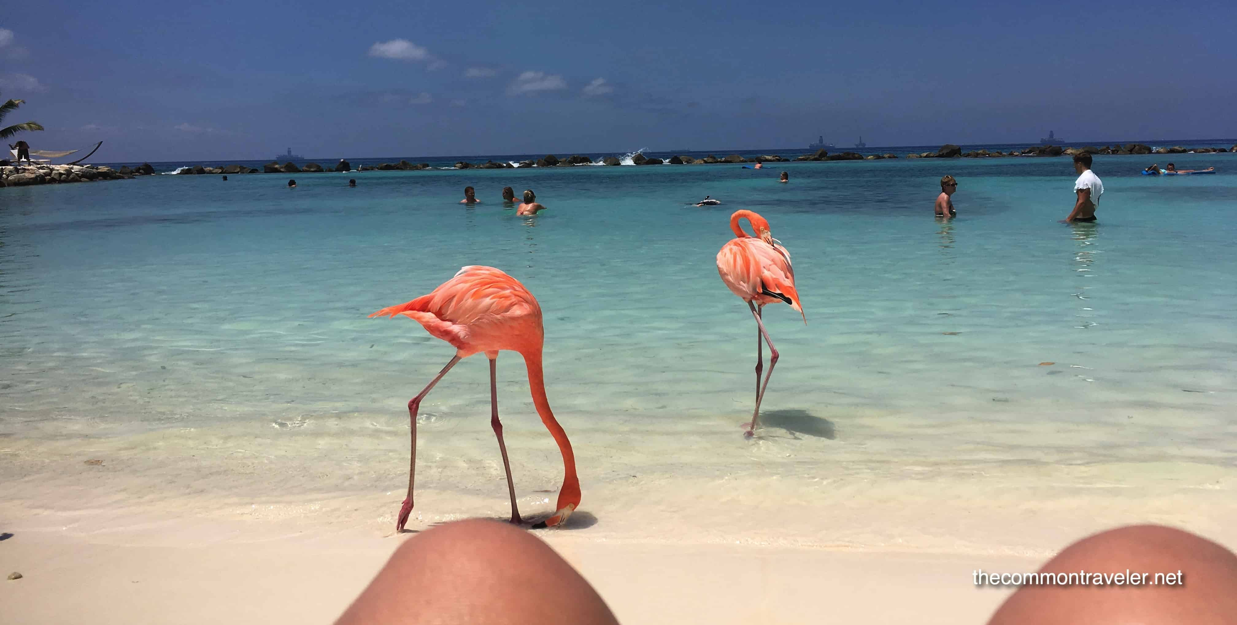 Visiting Flamingo Beach in Aruba