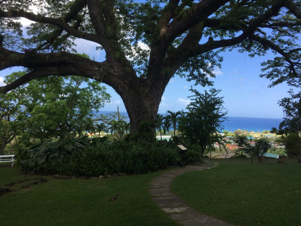 The Best Things to Do in St Kitts During a Port Day featured by top travel blog, The Common Traveler: the tree of life overlooking the Caribbean sea in St. Kitts