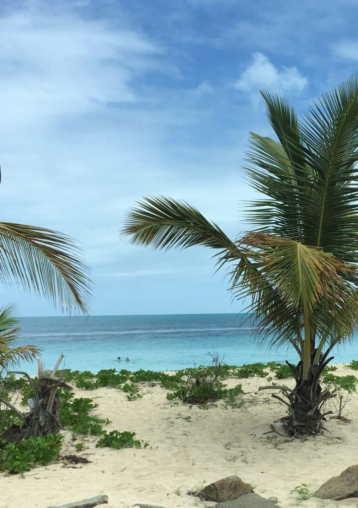 How to Enjoy Antigua  Beaches on a cruise port day, tips featured by top US travel blog, The Common Traveler: palm trees, white sand beach