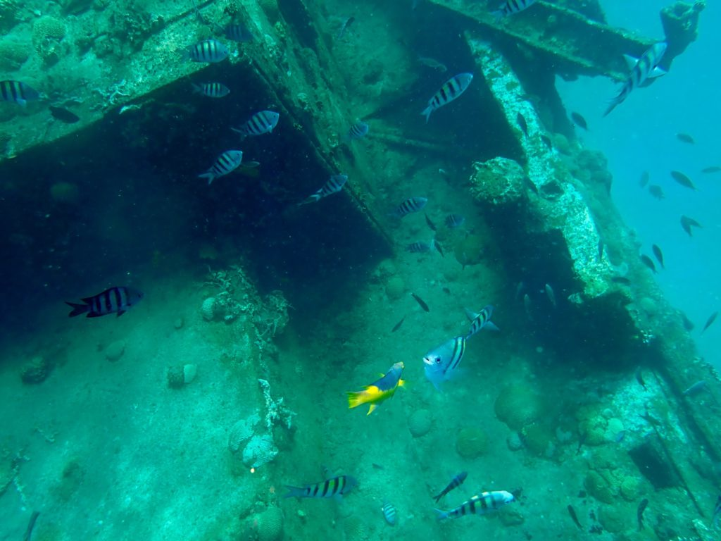barbados shipwreck with fish swimming