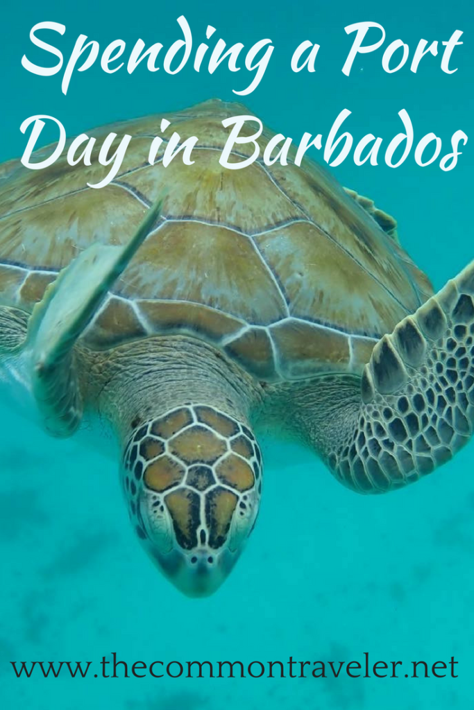 "Unique Things to Do in Barbados on a Port Day featured by top US cruise blog, The Common Traveler: turtle in water with ""Spending a Port Day in Barbados"""
