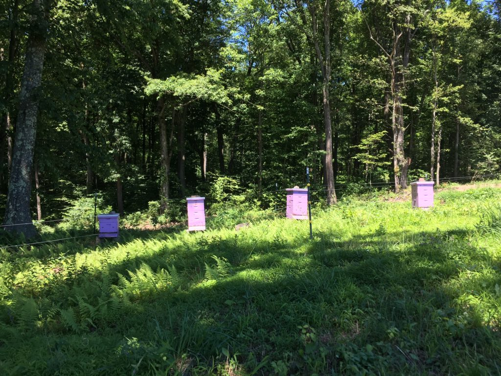lavender farm lavender colored bee hives