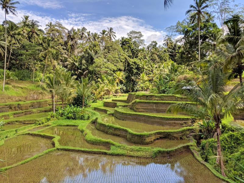 Travel bloggers' favorite places to visit in Asia and Oceania featured by top travel blog, The Common Traveler: rice terraces in Bali