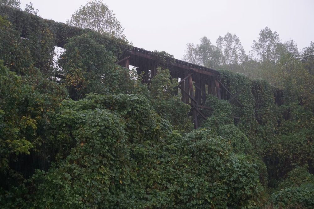 A Weekend in Shelby NC featured by top NC travel blog, The Common Traveler:  old train trestles covered in ivy in Shelby