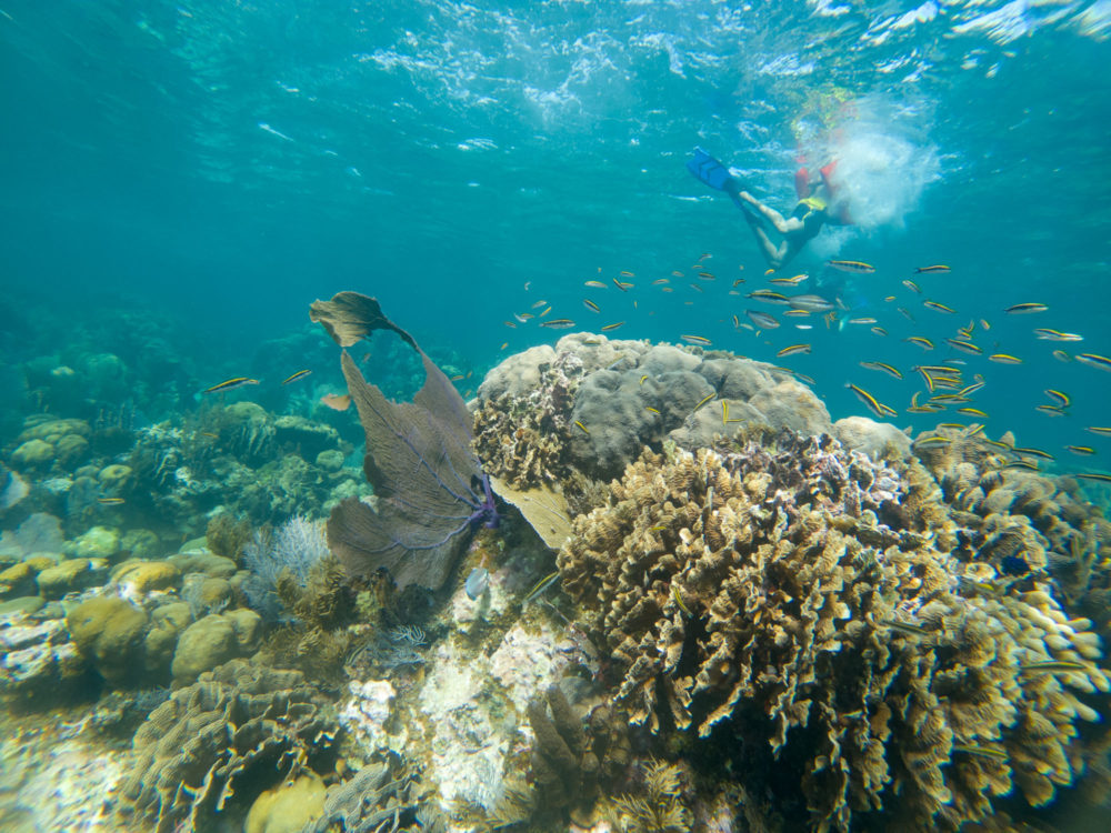 Top 10 Best Things To Do in Belize featured by top US travel blog, The Common Traveler: image of Underwater image of snorkeling in Belize's Barrier Reef