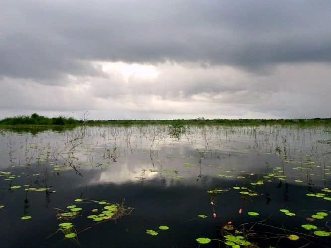 Top 10 Best Things To Do in Belize featured by top US travel blog, The Common Traveler: image of Crooked Tree Lagoon in wildlife sanctuary Belize