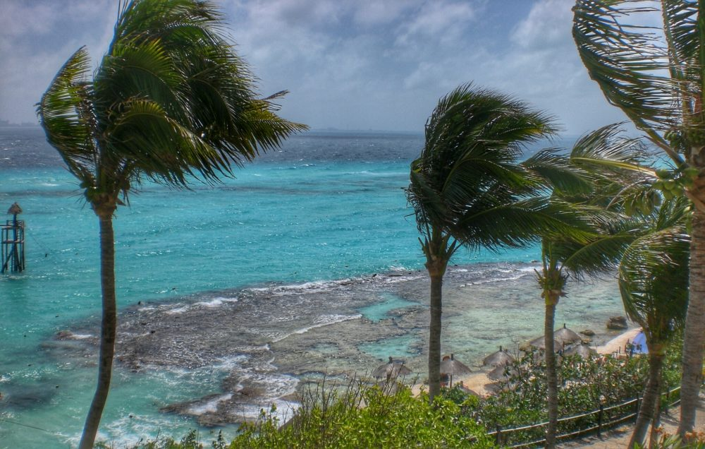 16 BEST PLACES TO VISIT IN MEXICO featured by top travel blog, The Common Traveler: image of palm trees with ocean in background in Isla Mujeres - one of the best Mexico vacation spots
