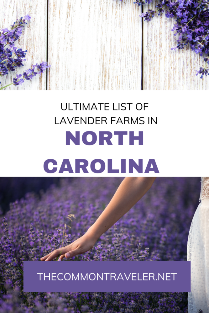 Best Lavender Farms in NC to visit featured by top NC blog, The Common Traveler