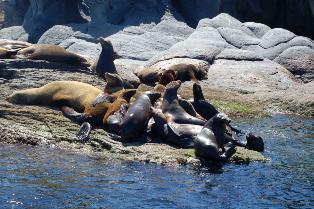 16 BEST PLACES TO VISIT IN MEXICO featured by top travel blog, The Common Traveler: image of sea lions sunning on rocks in Baja California, Mexico