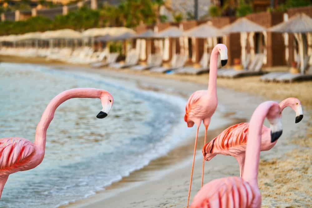Aruba Sightseeing tips featured by top travel blog, The Common Traveler: flamingos on beach