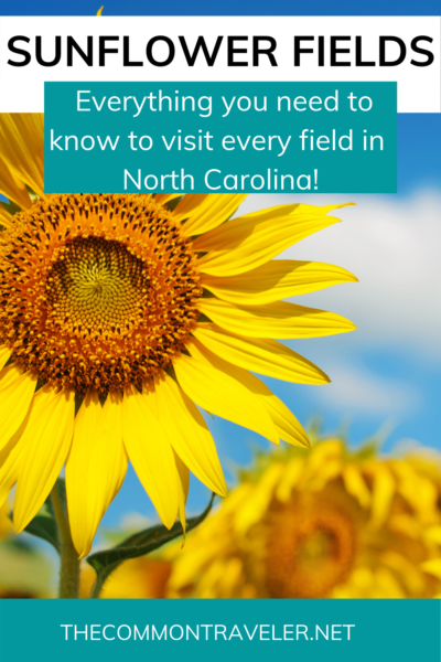 THE BEST SUNFLOWER FIELDS IN NC TO VISIT featured by top NC blogger, The Common Traveler.
