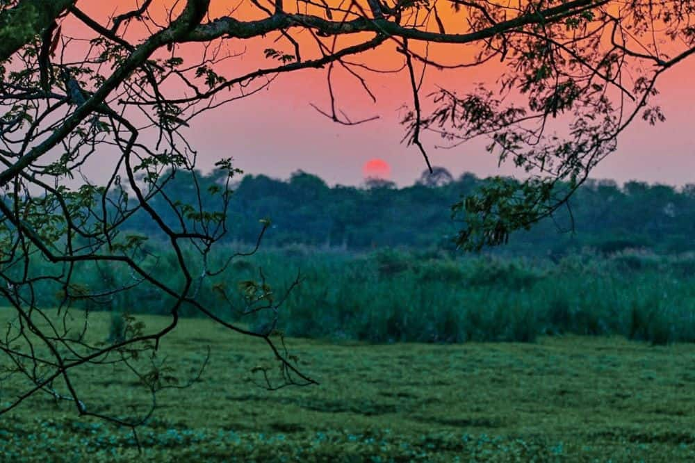THE BEST THINGS TO DO IN DELHI, INDIA - A COMPLETE TRAVEL GUIDE TO INDIA'S HISTORIC CAPITAL featured by  The Common Traveler; Image: sunset at Okhla Bird Sanctuary