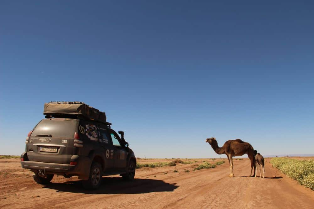 THE ULTIMATE ITINERARY FOR AN UNFORGETTABLE MOROCCO ROAD TRIP featured by top international travel blogger, The Common Traveler; Image Overland truck with camels on road
