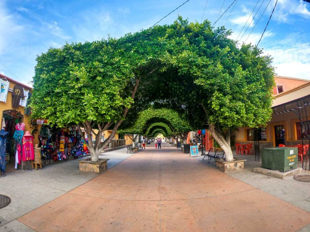 Mexico's Pueblos Magicos Worth Visiting by The Common Traveler: Image of pedestrian street arched by trees in Loreto. |Pueblos Magicos Mexico by popular US international blog, The Common Traveler: image of Loreto, Baja California Sur.