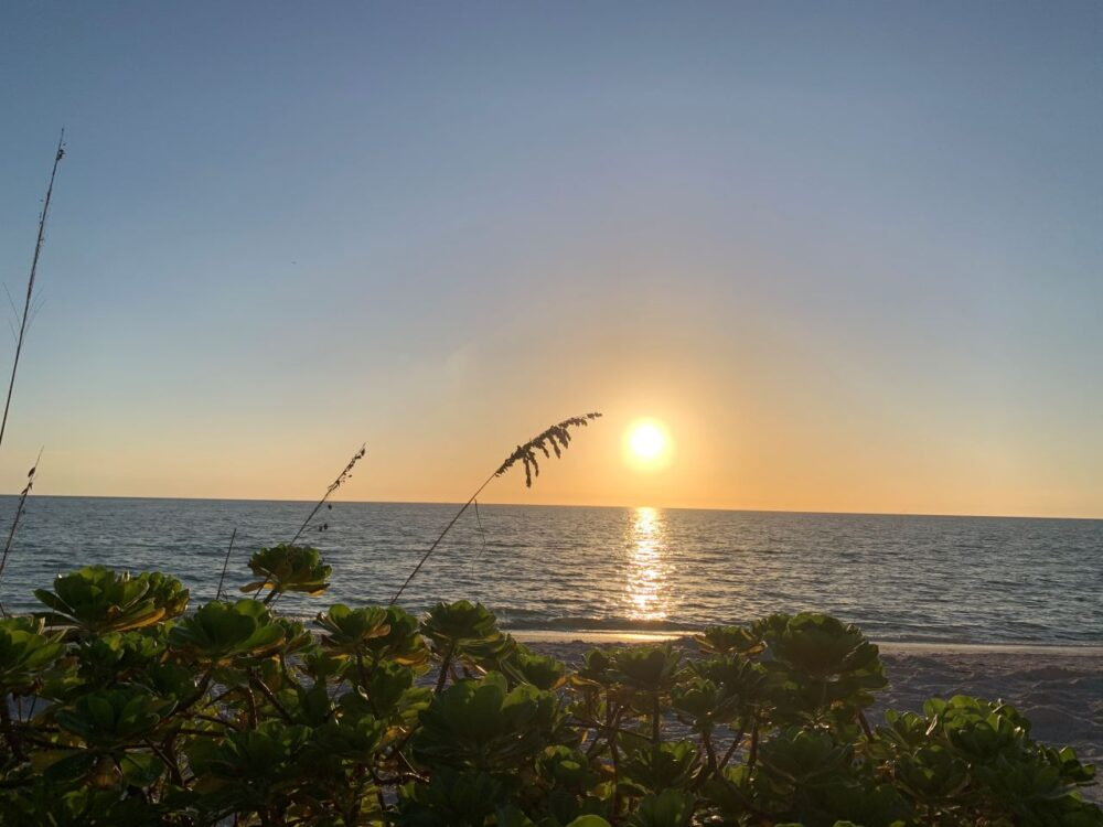 BEST THINGS TO DO IN BONITA SPRINGS, FL featured by top US travel blogger, The Common Traveler: image of Bonita Beach sunset with plants in front |Bonita Springs FL by popular US travel blog, The Common Traveler: image of the sun setting behind the ocean.