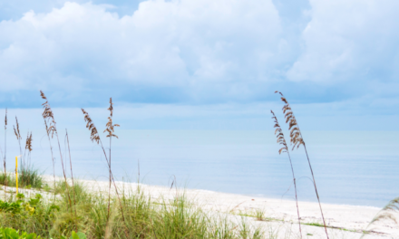 Ultimate Guide of the Best Things to Do in Bonita Springs, FL