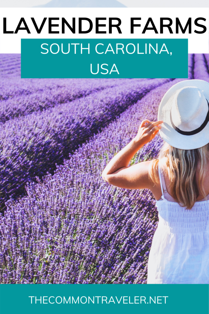 SC Lavender Farms: The Common Traveler shares the South Carolina lavender farms you can visit!  #lavendersc #scfarms #sclavenderfarms #sclavender |Lavender Farms by popular US travel blog, The Common Traveler: Pinterest image of a woman standing in a lavender field.