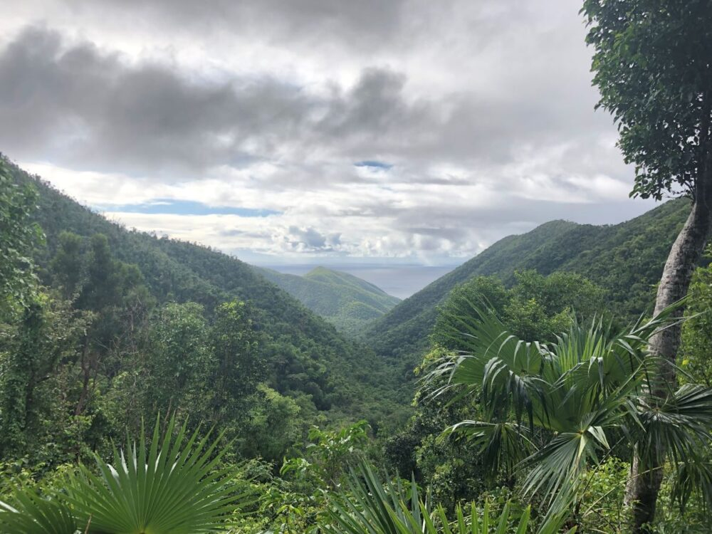 Image: tropical foliage on mountains from Reef Bay Trail in St. John, USVI. |Best Things to do in the US Virgin Islands: image of Reef Bay Trail in St. John.