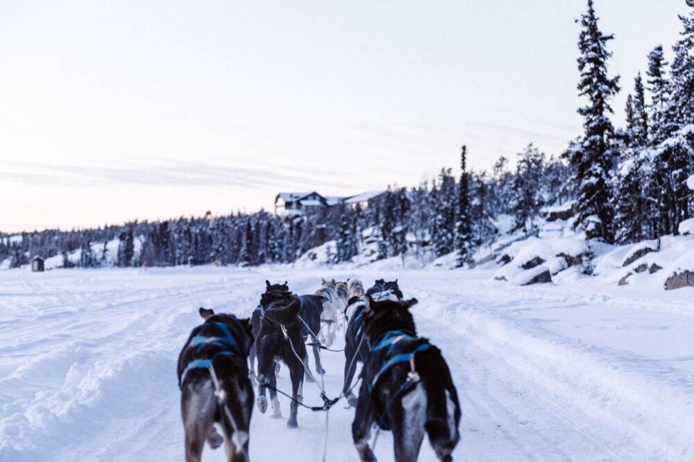 12 Amazing Canada Outdoor Activities | The Common Traveler | image: dogs leading a dog sled on snow |Canada Outdoor Activities by popular US international travel blog, The Common Traveler: image of a dog sled in snow.
